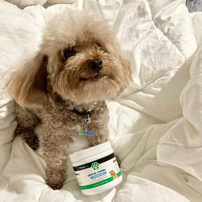 small-dog-dental-chews